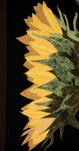 detail of large sunflower side view a