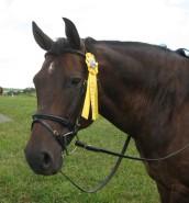 kathy's horse